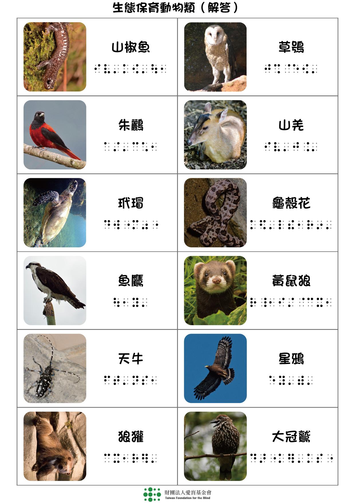 生態保育動物類